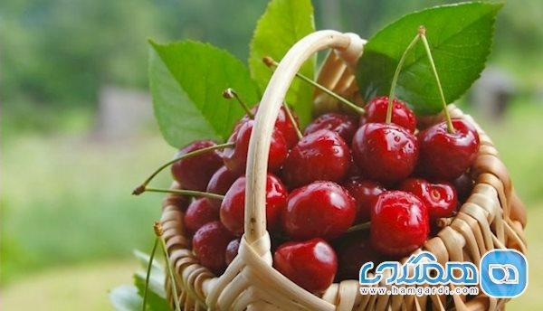 اعصاب خود را با این میوه تقویت کنید