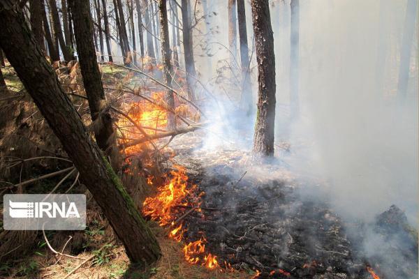 خبرنگاران حدود سه هکتار از جنگل های بخش دودانگه ساری در آتش سوخت