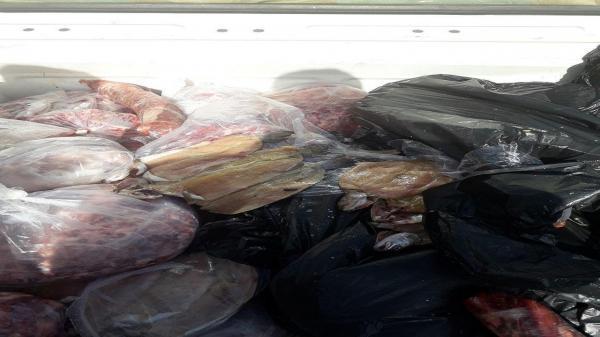 جمع آوری یک تن گوشت کشتار غیر مجاز